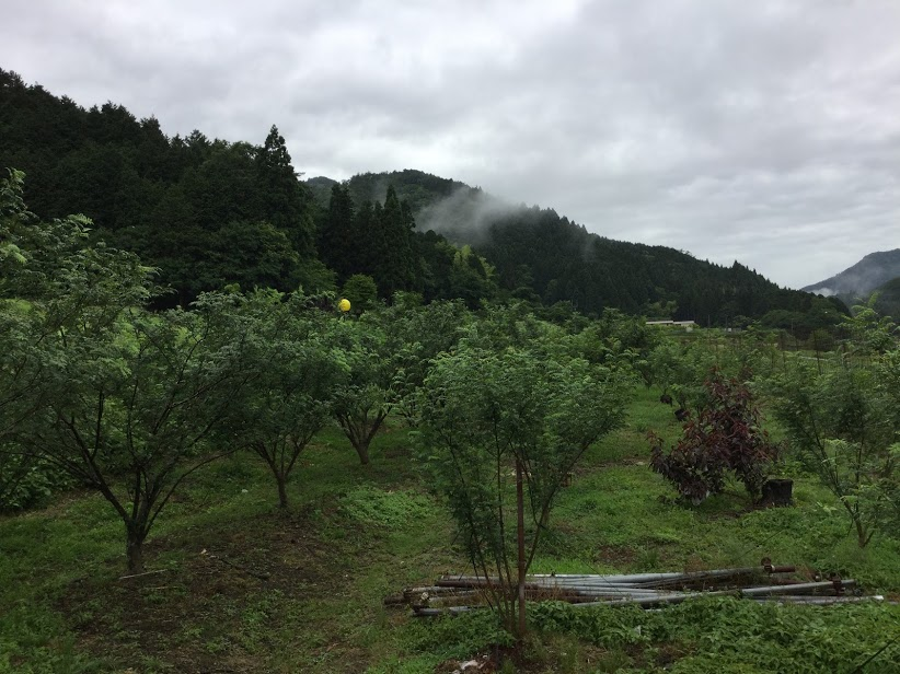 http://www.gogyofuku.co.jp/kan/entryimg/20190615asakurasansho02.JPG